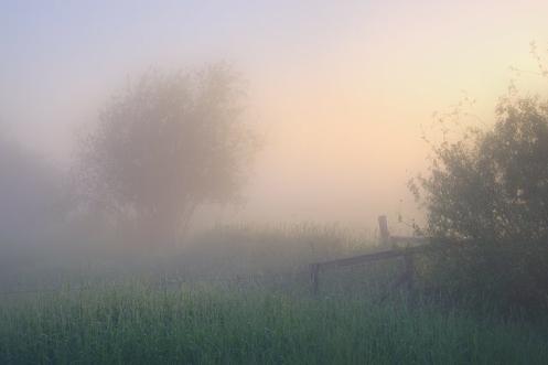 landscape, fog, summer, Alberta, Dan Jurak, pasture, fences, foggy,