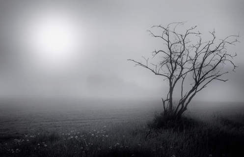black and white, fog, foggy, pasture, landscape, Alberta, Dan Jurak, prairie, rural