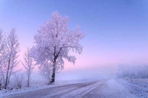 frost, hoar frost, snow, winter, Alberta, landscape,