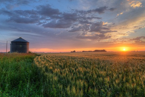 Barley and grain bins
