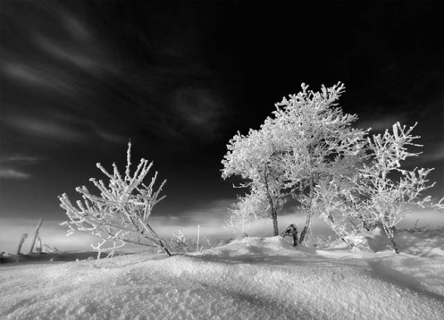 winter, landscape, black and white, Dan jurak, Alberta, prairie, snow, frost, hoar frost,