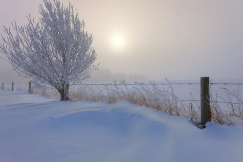 landscape, snow, drift,, praire, Alberta, Dan Jurak, foggy,