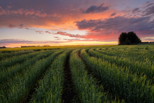 Dan Jurak, praire, wheat, summer, landscape, colour, storm, Alberta, Travel Alberta, rural, farm, agriculture, crops