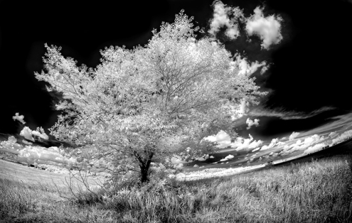 infrared, landscape, lifepixel, Dan Jurak, prairie, summer, tree, clouds, hills, Alberta, high key,