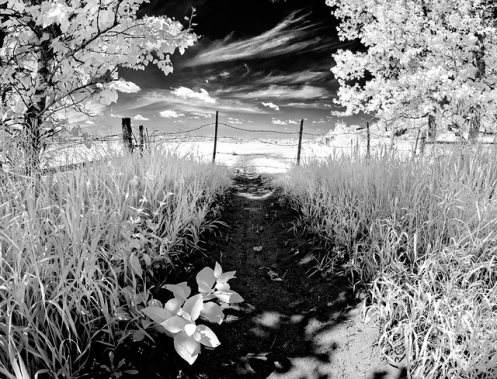 infrared, landscape, fineart, black and white, black & white, Dan Jurak, prairie, summer, pasture, farm, trail, road, leaves, trees, poplar, dreamy, ethereal,