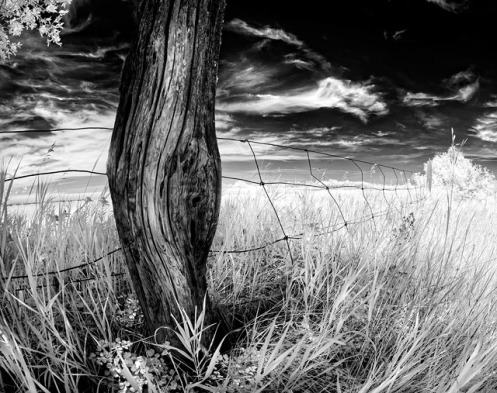 infrared, landscape, farm, rural, Dan Jurak, ethereal, fine art, fineart, black and white, Alberta, rural,