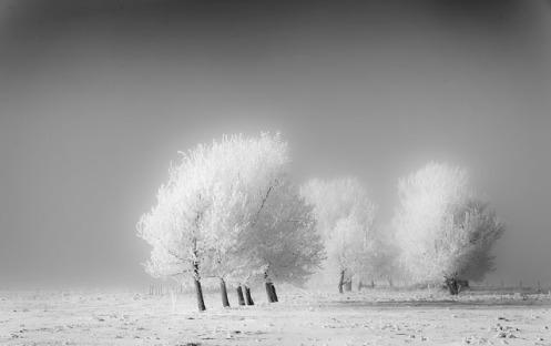 landscape, monochrome, black and white, frost, hoar frost, winter, minimalist, high key, Dan Jurak, Alberta, prairie,