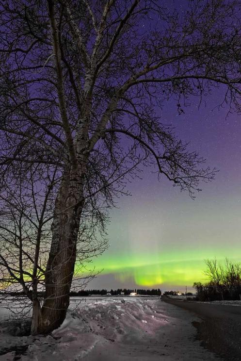 aurora, aurora borealis, northern lights, prairie, nightsky night sky, stars, winter, prairie, Dan Jurak, Alberta, landscape, snow drifts,
