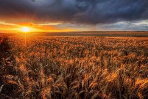 barley, autumn, crops, sunset, landscape, rural, wheat, d850, Nikon, buyers remorse, clouds, storm, Dan Jurak, prairie,