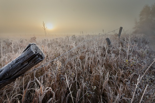 frost, autumn, fog, fall, sunrise, alberta, landscape, prairie, farm, fence, barbed wire, rural, Dan Jurak