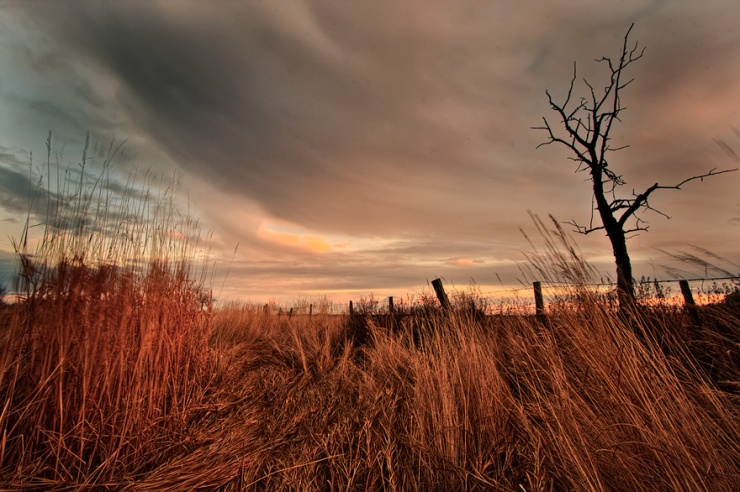 autumn, landscape, fall, windy, sunset, trees, prairie, farm, wheat, grasses, storm, silhouette, Dan Jurak, rural,