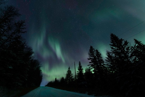 northern lights, aurora borealis, winter, spruce threes, Christmas, Dan Jurak, landscape, snow, winter, stars, long exposure,