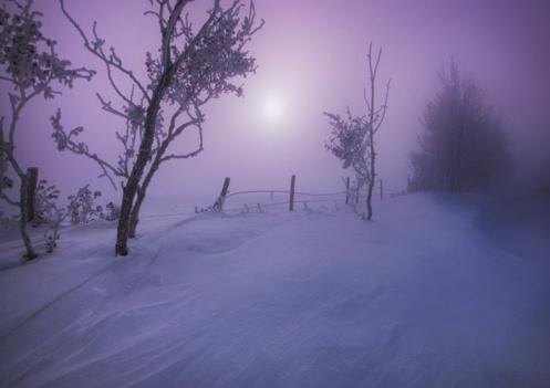 popularity, monkey see monkey do, landscape, winter, dan jurak, alberta, snow, cold, drifts, rural, foggy, sunrise, foggy,