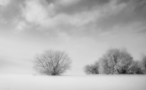 snow, winter, landscape, dan jurak, black and white, mono, foggy, prairie, Alberta,