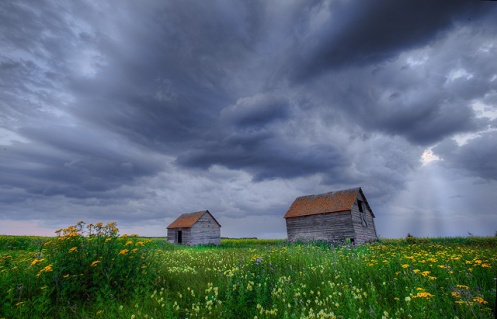 farm, landscape, Alberta, summer, storm, wildflowers, prairie, Dan Jurak, rural, granaries, granary, wooden buildings,