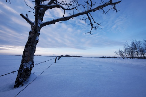 prairie, landscape, winter, Dan Jurak, Alberta, snow, cold, sunset, poplar tree, barbed wire fence,