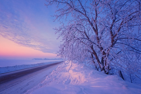 unique, landscape, snow, winter, Alberta, frost, prairie, Dan Jurak, cold, frosty, colour, sunrise, dawn, trees, snow drifts, Dan Jurak
