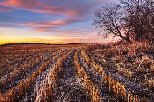 calm, matisse, peace of mind, landscape, autumn, fall, soothing, Alberta, Dan Jurak,