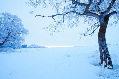 before image, landscape, elm tree, farm, abandoned, snow, winter, monotone, frost, landscape, Dan Jurak,