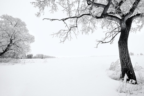 after image, landscape, elm tree, farm, abandoned, snow, winter, monotone, frost, landscape, Dan Jurak,