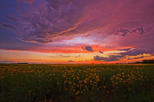 canola, farm, rural, landscape, sunset, summer, orange, gold, horizontal, storm, Dan Jurak, travel alberta, dusk,