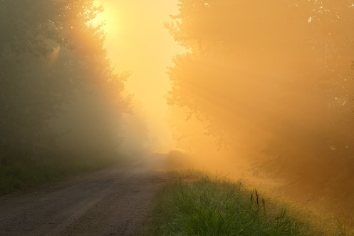 landscape, foggy, alberta, golden, road, trail, summer, rural, trees, Dan Jurak, fog, yellow, horizontal,