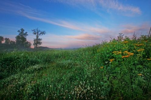 prairie, sunrise, summer, horizontal, greenery, dawn, farm, rural, trees, yellow tansy, ditch, Alberta, horizontal, Dan Jurak,