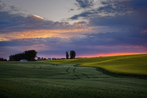 landscape, summer, farm, rural, agriculture, canola, wheat, grain, dawn, sunrise, horizontal, Alberta, Dan Jurak,