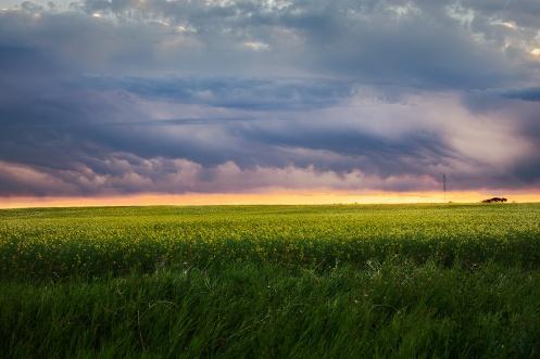 sunrise, storm, prairie, canola, farm, rural, alberta, storm chaser, Alberta, Dan jurak, horizontal,