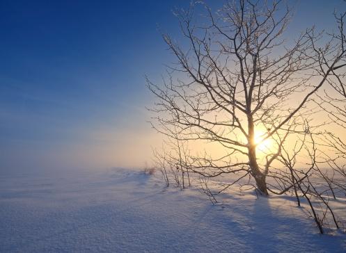 landscape, winter, fog, foggy, snow, Alberta, Dan Jurak, trees, prairie, dreamy,