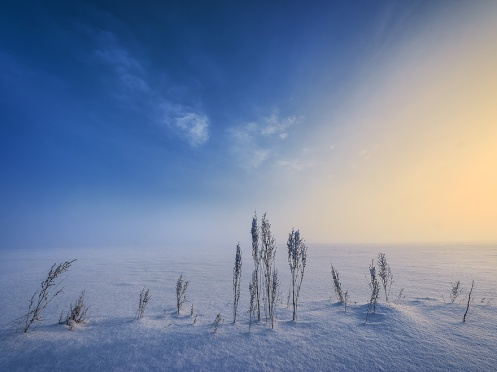 learning photography, landscape, winter, snow, cold, prairie, Dan Jurak, surreal, foggy,