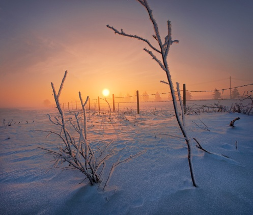 landscape, golden light, prairie, frost, snow, winter, cold, alberta, dan jurak, fence, farm, sunrise, dawn,