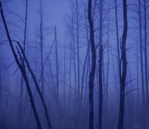 landscape, forest, forest fire, fog, foggy, dan jurak, landscape, Alberta, deer hunt, deer,