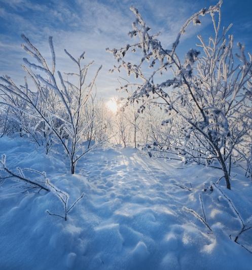 frost, snow, hoar frost, prairie, brush, landscape, vertical, Dan Jurak, Alberta,